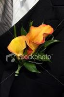 ist2_5934219-groom-s-corsage
